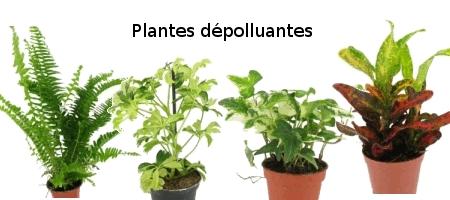Plante d polluante d 39 int rieur - Plantes interieur depolluante ...